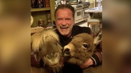 """""""Escucha a los expertos e ignora a los idiotas"""". Arnold Schwarzenegger, su poni y su burro piden que nos quedemos en casa"""