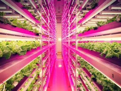 ¿Agricultura tradicional? Eso es cosa del pasado: esta granja 'de interiores' es 100 veces más productiva