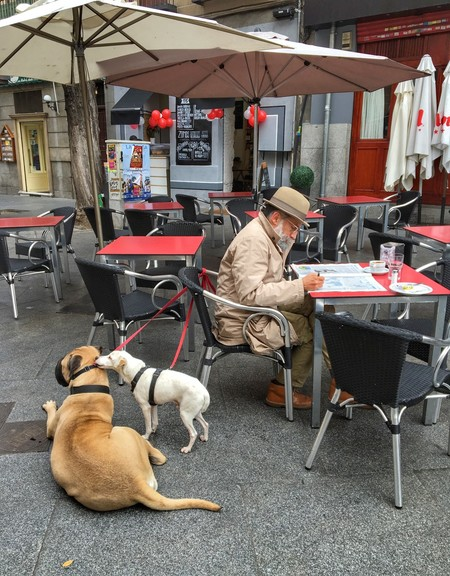 Madrid Dogs Morning In The City Newspaper Pensioner Stroll Grandpa However 1185991