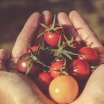 Estas son las frutas y verduras que están de temporada (y 23 recetas para disfrutarlas este verano)
