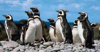 Vigilia de los pingüinos en directo
