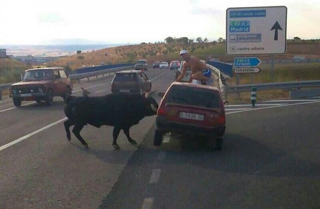 Toro embiste coche en Guadalajara