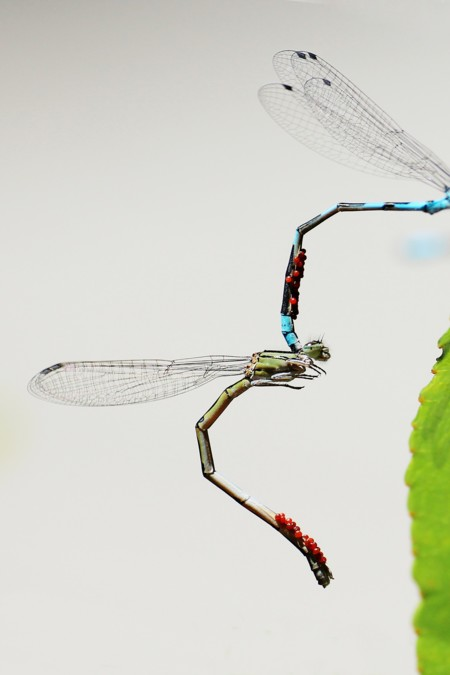 Dragonfly 453346 1920