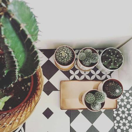 Plantas 4
