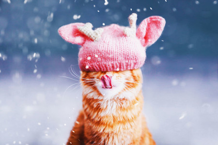 Ginger Cat Photography Kotleta Cutlet Kristina Makeeva Hobopeeba 10