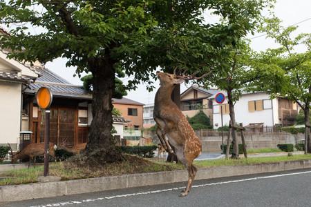 Planet Deer Yoko Ishii 5