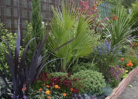 Una buena idea: packs para diseñar arriates de jardín