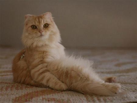 Hilarantes imágenes de gatos incomodamente sentados