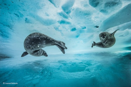 Swim Gym C Laurent Ballesta Wildlife Photographer Of The Year