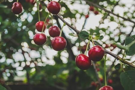 Cherries 839864 1920