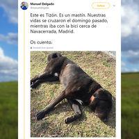 El mejor actor de España se llama Tizón, es un perro y su historia está conmoviendo a todo Twitter