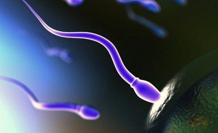Millones de espermatozoides para un solo bebé
