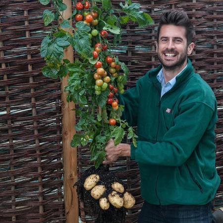 TomTato, una planta que produce jitomates y papas al mismo tiempo