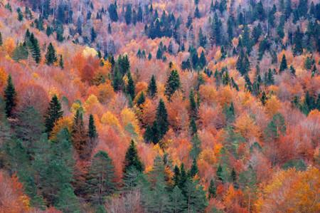 11 bosques españoles que explotan de color durante el otoño
