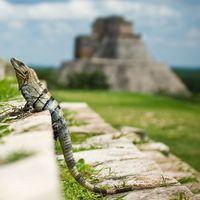 La sequía que acabó con el corazón de la civilización maya: nuevos datos apoyan la teoría del colapso climático