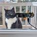 Un gato cariñoso, una Raspberry Pi y un ingeniero vasco: ¿qué podía salir mal?