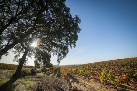 Vinedos Ribera Duero