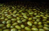 El agua de las aceitunas puede tener propiedades plaguicidas