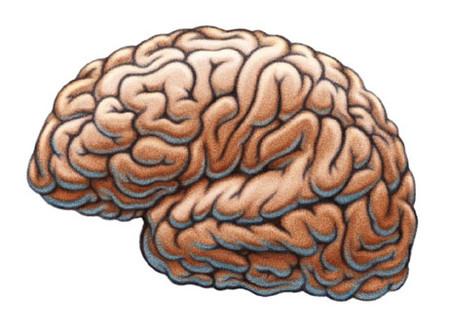 El cerebro bilingüe es más resistente al envejecimiento