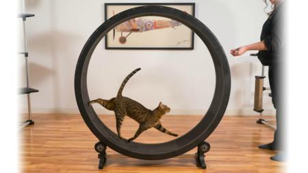 [Inocentada 2015] Con la Cat Exercise Wheel tu gato podrá correr hasta el infinito como si fuera un hamster
