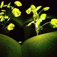 Las lámparas vegetales ya son una realidad: así estamos intentando convertir cualquier planta en una farola