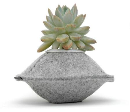 Warm plants