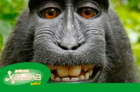 Nuevos rumores del iPhone 6, monos que sacan selfies y más. Galaxia Xataka Móvil