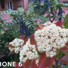 Foto 7 de 10 de la galería comparativa-fotografica-galaxy-s6-iphone-6-y-oneplus-one en Xataka