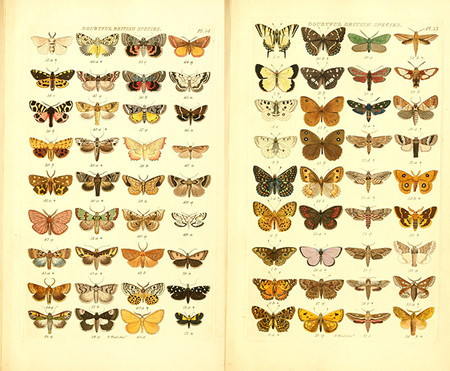 Ilustraciones Mariposas Antiguas