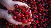 Cerezas: una buena fuente de vitaminas y minerales en verano