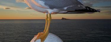 'L'Illa', de Rodrigo Roher, rompiendo tópicos al retratar la famosa isla de Benidorm desde  una mirada distinta