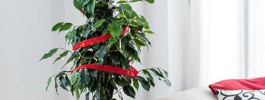 Planta Claus, un árbol de Navidad responsable con el medio ambiente (y solidario)