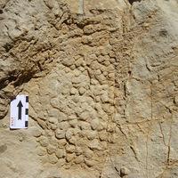 Se encuentra la piel de un dinosaurio impresa en roca en Barcelona