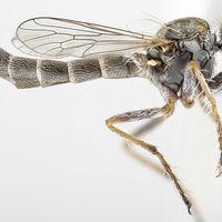 Nueva mosca asesina descubierta en África