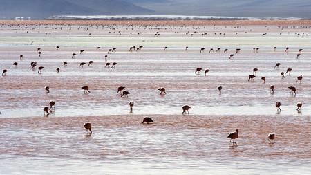 Andean Flamingos Laguna Colorada Bolivia Luca Galuzzi 2006
