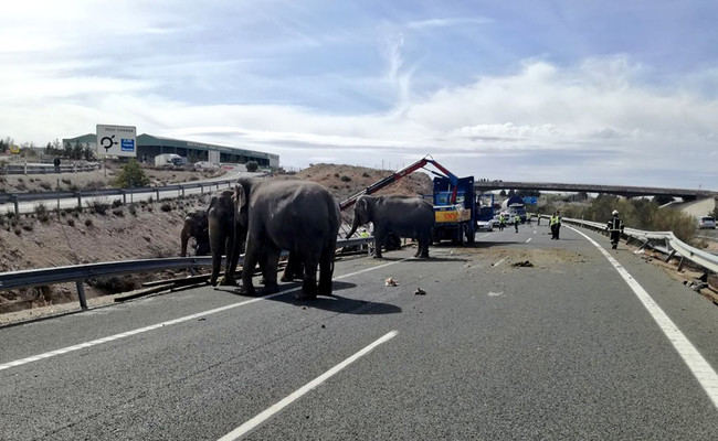 Elefantes sueltos por la autovía, un lunes cualquiera en la provincia de Albacete