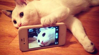 iOS desde cero: Redes sociales