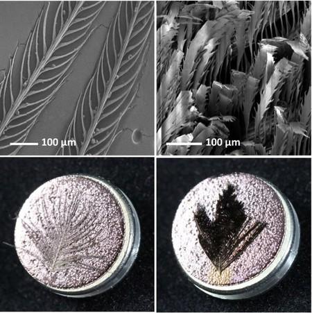 Comparativa Plumas Normales Supernegras Microscopio 1097900277 11122602 660x662
