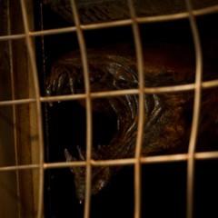 Foto 4 de 7 de la galería riddick-imagenes en Blog de Cine