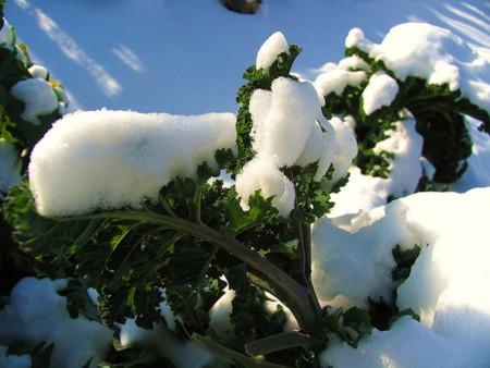 Kale y nieve