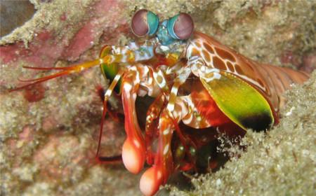 Diagnosticando el cáncer a partir del sistema de visión de las mantis marinas