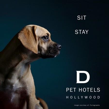 D Pet