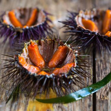 Erizo de mar, un bocado tan exquisito como el caviar: cómo disfrutarlo en su mejor momento de temporada