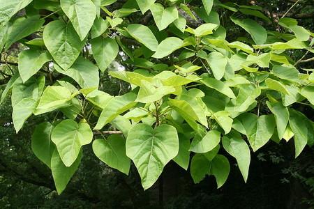 Esta es la planta que crece más rápidamente: 3,7 mm por hora de media