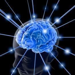 Breves apuntes sobre la inteligencia humana (y las trompas de elefante) (I)