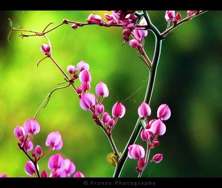 Spring Colors, por pranav