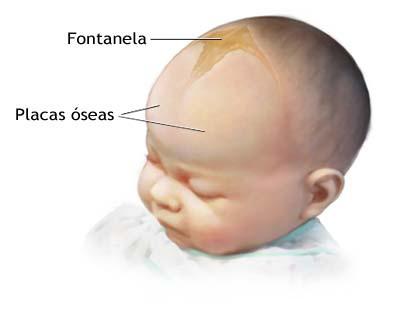 ¿Cuándo se cierra la fontanela del bebé?