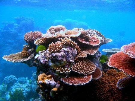 La muerte que nos aguarda en la Gran Barrera de Coral