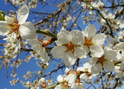 Diez imprescindibles para la Primavera 2011 (I)
