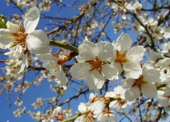 primavera básicos